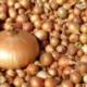 лук севок для посадки