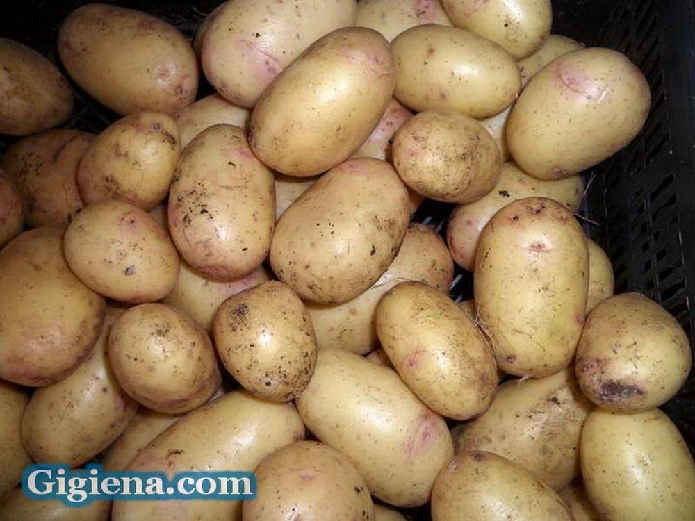 картофель сорт нектар фото