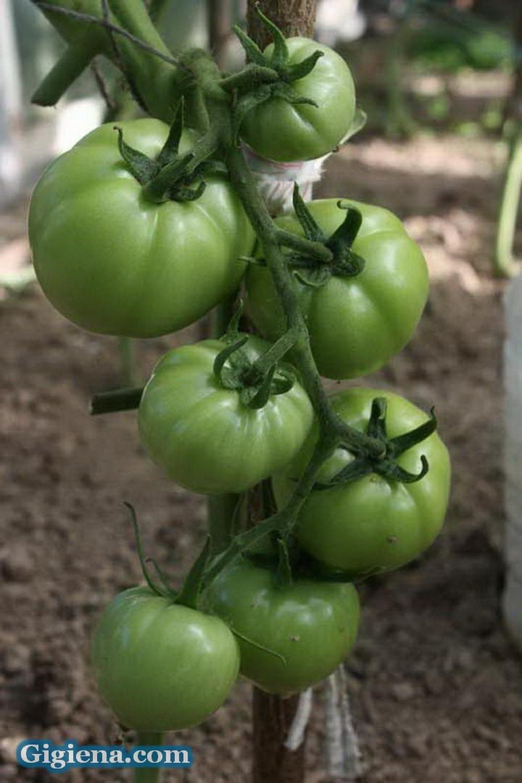 помидоры ажур