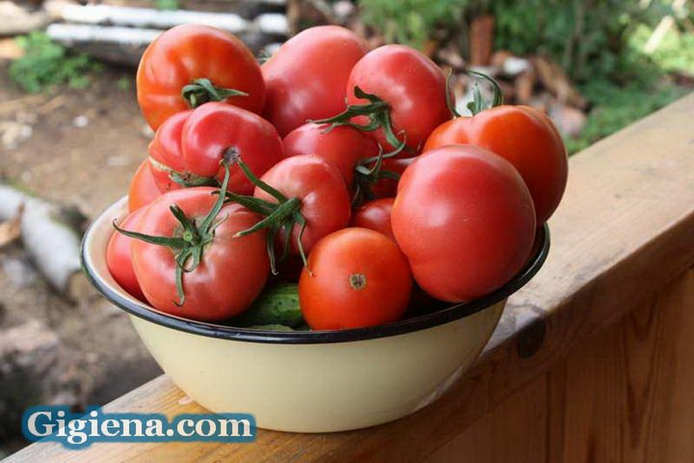 помидоры сорта ажур