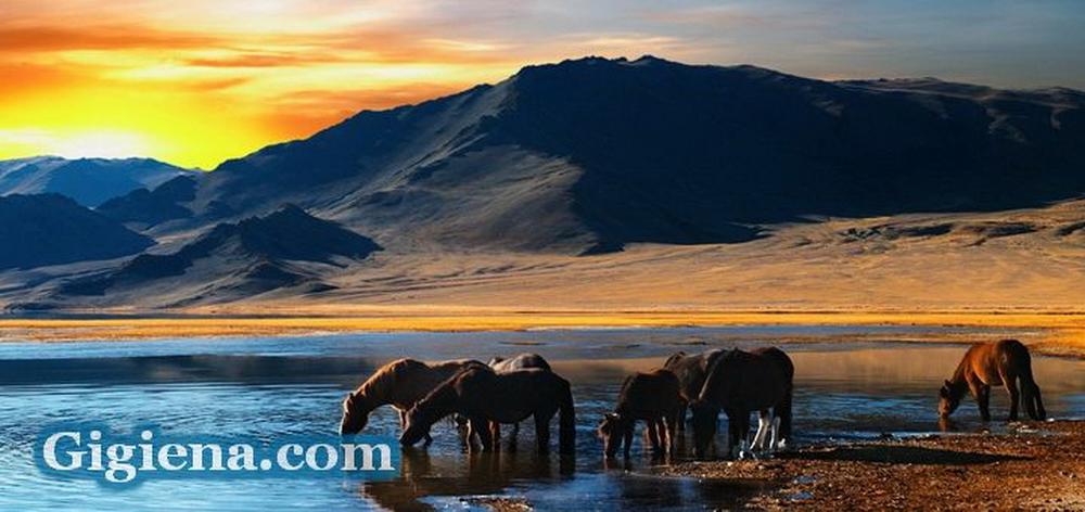 монголия для туризма