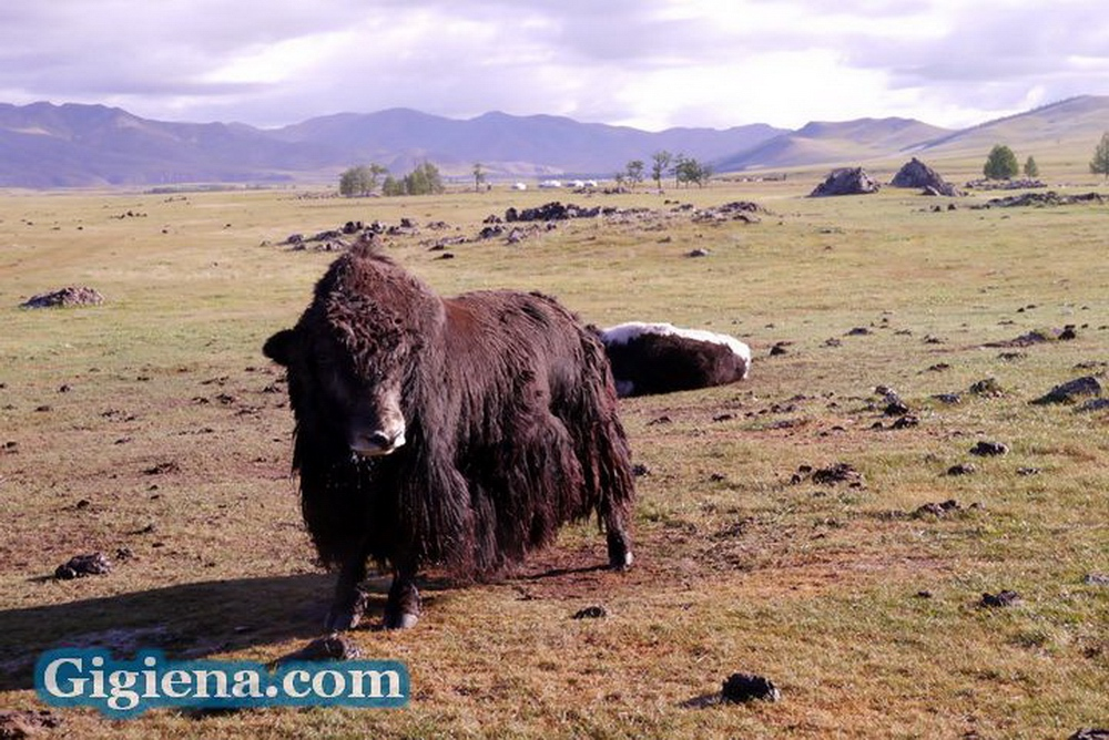 монголия долина орхон