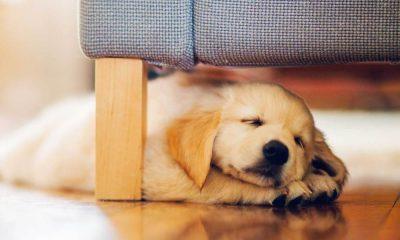 завести щенка