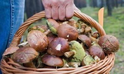 кормить грибами