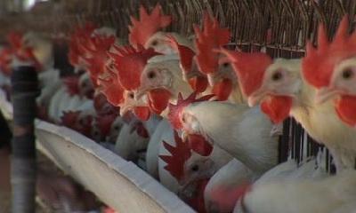 ситуация по птичьему гриппу