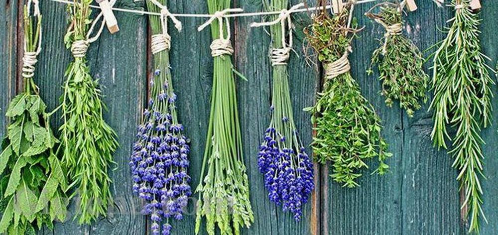 лекарства на основе растительного сырья