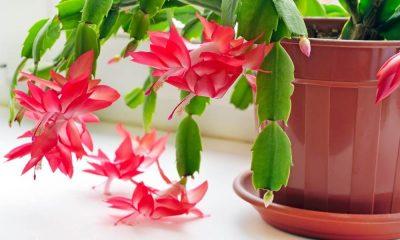 цветы уход в домашних условиях